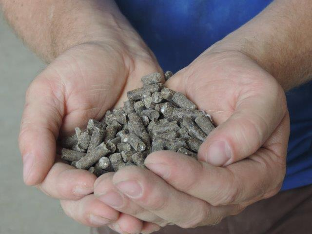 poultry manure pellets held in hand