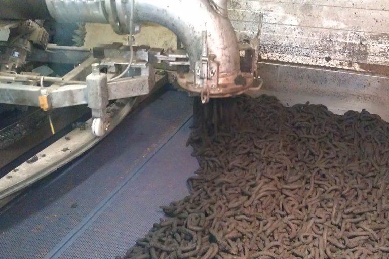 sewage sludge drying